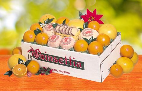 Poinsettia's Holiday Special