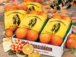 Citrus Gift Packs
