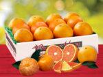 Orange Quartet